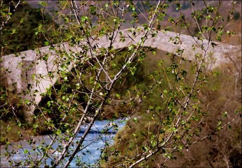 Un pont en Provence-PhotosLP Fallot-Avril 2011 (2).jpg
