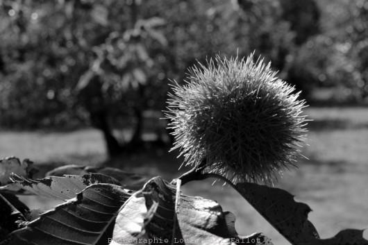 pause,automne,blogue