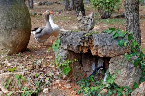 Artgriculture-PhotosLP Fallot (1).jpg