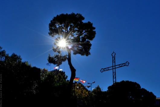 arbre,cagnes sur mer,chateau,frère marie-victorin,photo