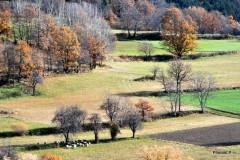 Automne- Haute-Provence- Novembre 2009-PhotosLP Fallot (3).JPG