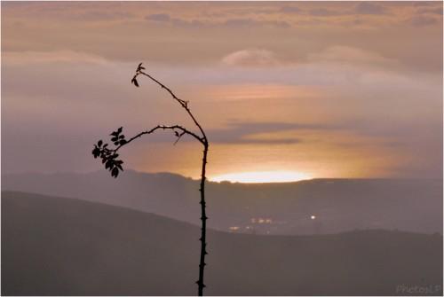 Au soleil levant-1012011-PhotosLP Fallot (4).jpg