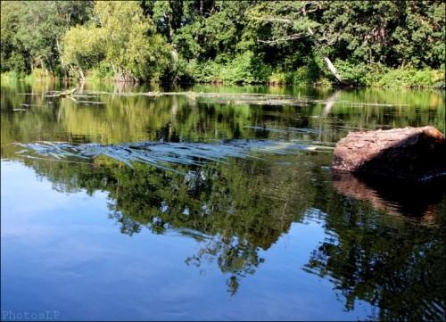 La rivière endormie - photosLP Fallot (2).jpg