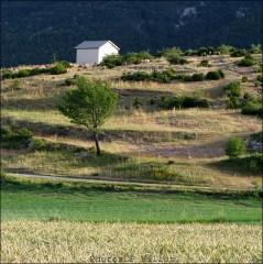 Moutons dans le village-PhotosLP Fallot (16).jpg