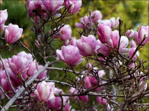 Fleurs-PhotosLP Fallot (4).jpg