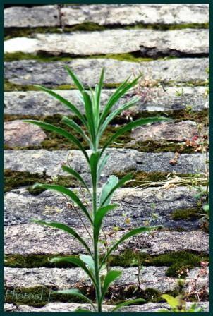 herbe-PhotosLP.jpg