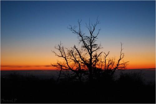 Jour de l'an-PhotosLP Fallot-01012011 (02).jpg