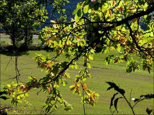 Haute-Provence 2012-PhotosLP Fallot (1).jpg