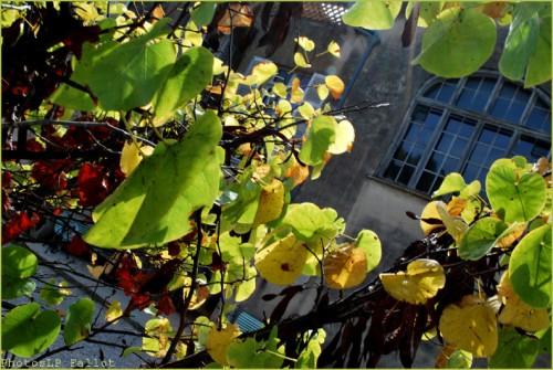 Parc Renoir-Cagnes- 9 octobre 2010-PhotosLP Fallot (2).jpg