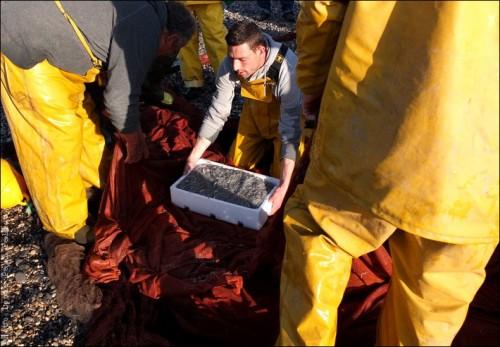 Pêche à la poutine au Cros de Cagnes-PhotosLP Fallot (3).jpg