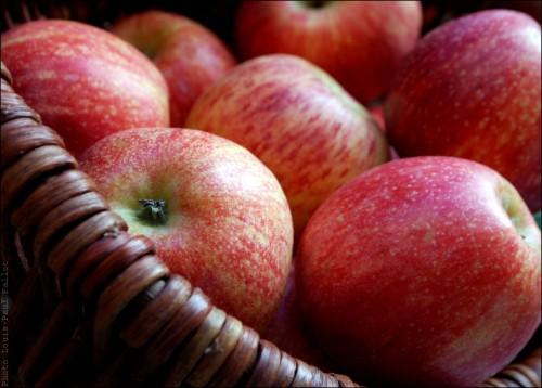 Pommes-PhotosLP Fallot.jpg