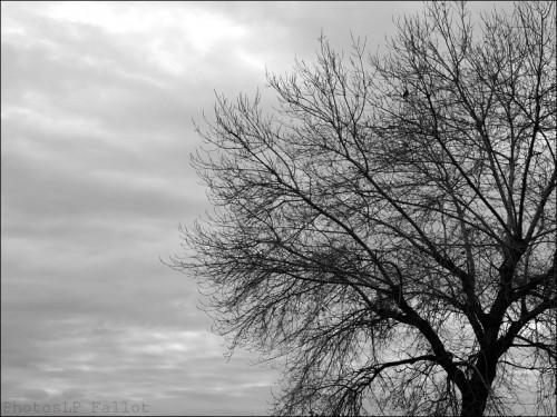st laurent du var,photo,plage,hiver,arbre