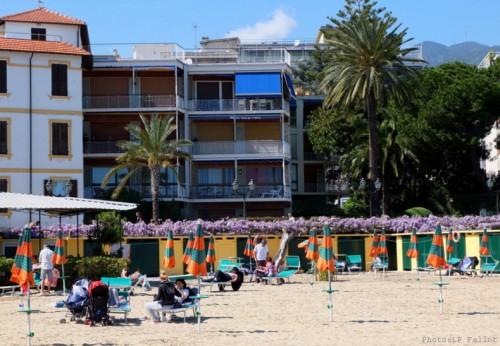 Glycine à San Remo-PhotosLP Fallot (5).jpg