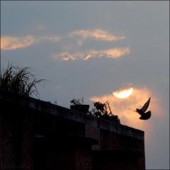 Rendez-Vous sur un toit (2) PhotosLP.jpg