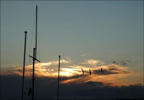 NICE FEVRIER 2012-LP FALLOT   (14).jpg
