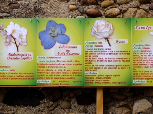 Symphonie Florale-PhotosLP Fallot (20).jpg