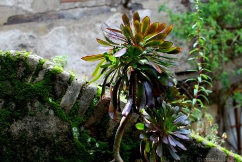Symphonie Florale-PhotosLP Fallot (7).jpg