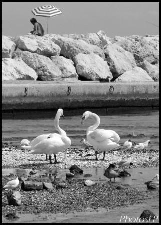 PhotosLP-2008-Loup.jpg