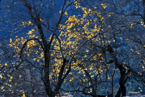 Automne- Haute-Provence- Novembre 2009-PhotosLP Fallot (2).JPG