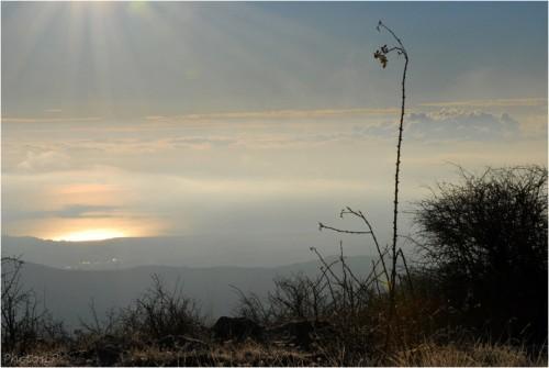 Au soleil levant-1012011-PhotosLP Fallot.jpg