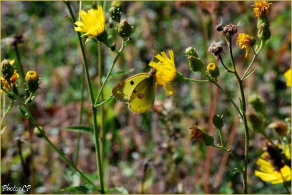 Fleurs de septembre-PhotosLP-2010 (3).jpg