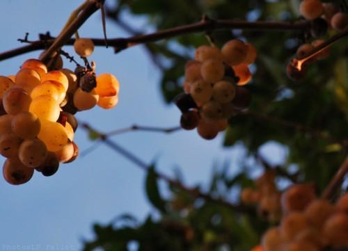 Lumière d'hiver-Cagnes-PhotosLP Fallot (6).jpg