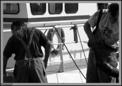 Pêche au thon-Bretagne-PhotosLP.jpg