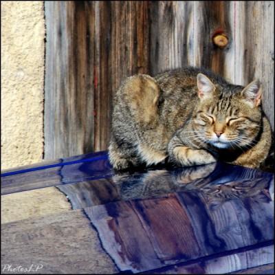 Le Chat sur un capot-octobre 2010 (3).jpg