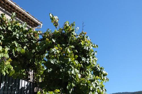 couleurs,haute-provence,méailles,annot,entrevaux,villars sur var,vacances,automne 2012,abeille,papillon,thym