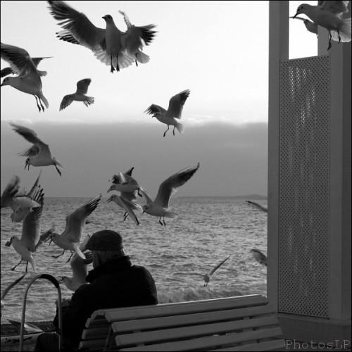 NICE FEVRIER 2012-LP FALLOT   (11).jpg