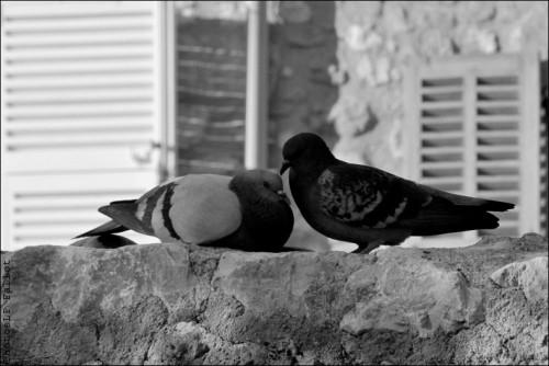 Mots d'amour-PhotosLP Fallot (2).jpg