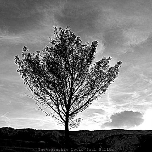 Arbre -PhotosLP Fallot (2).jpg