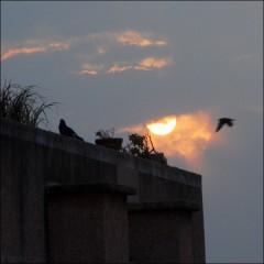 Rendez-Vous sur un toit (4) PhotosLP.jpg