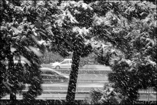 Tempête de neige sur Nice-PhotosLP Fallot.jpg