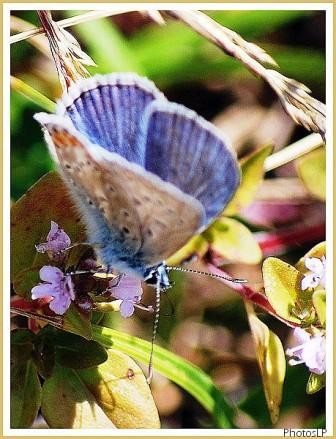 Papillon Bleu-PhotosLP-2008.jpg