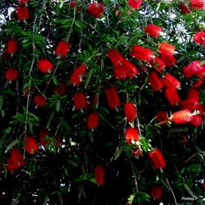 Fleurs 2010 -PhotosLP Fallot .JPG
