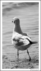 L'oiseau blanc-PhotosLP.jpg