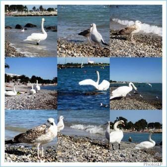 Les oiseaux blanc-PhotosLP-2008.jpg