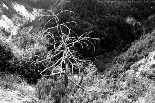 arbre,défifito,livre,'alain corbin,citation,'yves bonnefoy,photo;photographie