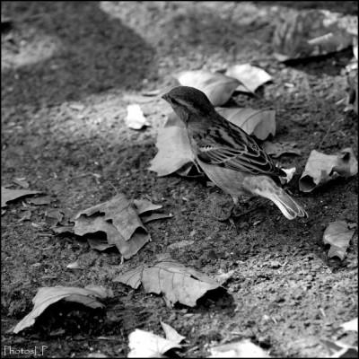 L'Oiseau-PhotosLP Fallot.jpg