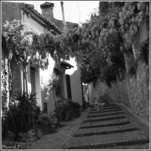 GLYCINES-CAGNES- 2010-PhotosLP FALLOT (7).jpg