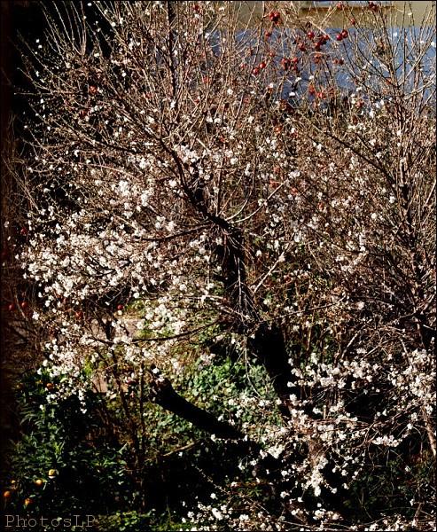 Fleurs-PhotosLP Fallot (3).jpg