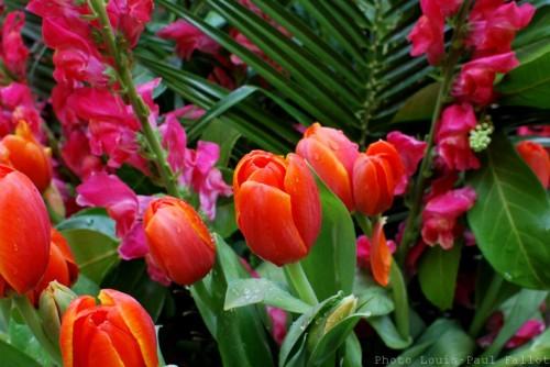 expo fleurs,symphonie florale,cagnes sur mer,haut de cagnes,fleurs,village,carte de france des paysages