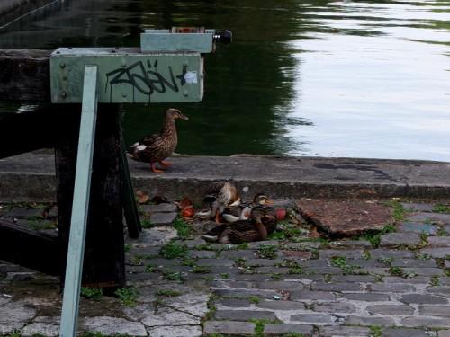 Le long du Canal St Martin-Série couleur-PhotosLP Fallot (5).jpg