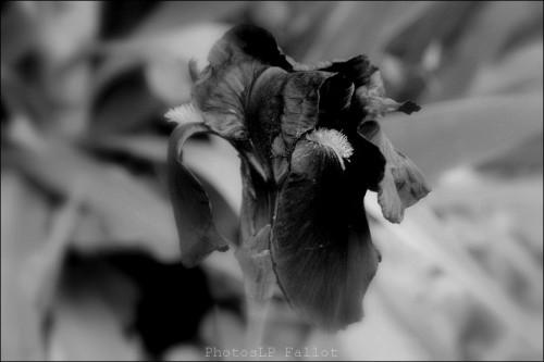 Fleurs en hiver-PhotosLP Fallot (3).jpg