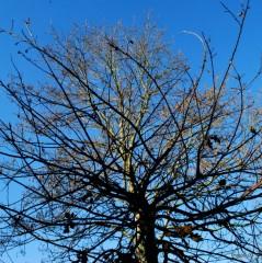 Les arbres-PhotosLP Fallot-DSC_0208.JPG