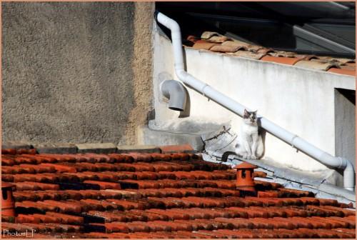 Un chat sur le toit-PhotosLP FALLOT.jpg