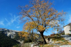 Automne- Haute-Provence- Novembre 2009-PhotosLP Fallot (5).JPG
