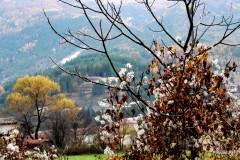 Automne- Haute-Provence- Novembre 2009-PhotosLP Fallot (6).JPG