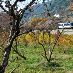 Automne- Haute-Provence- Novembre 2009-PhotosLP Fallot.JPG